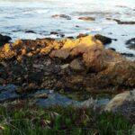 Vibrance of Light Carmel rocks showing through a calm surf